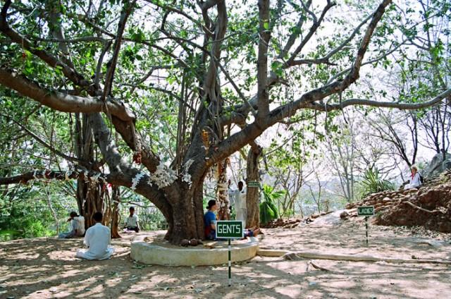 Дерево медитаций.