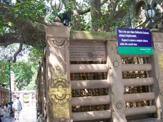 Бодхгая Дерево Бодхи, под которым Будда Достиг Просветления