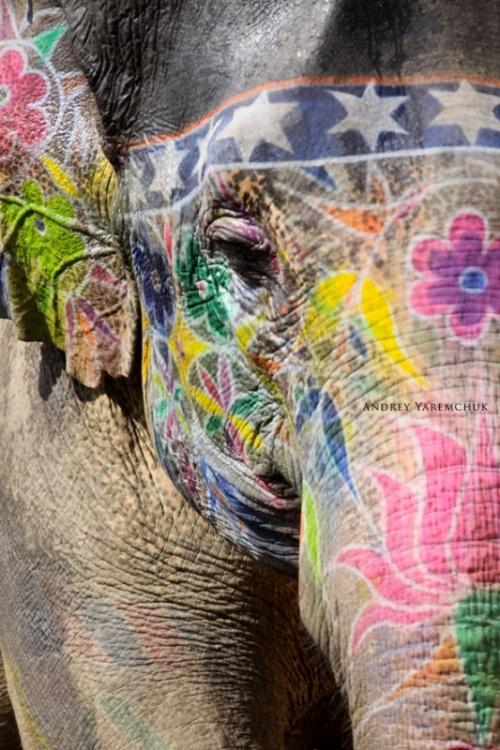 color elephant, Jaipur