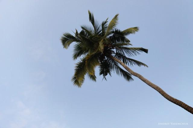мысли и пальмы