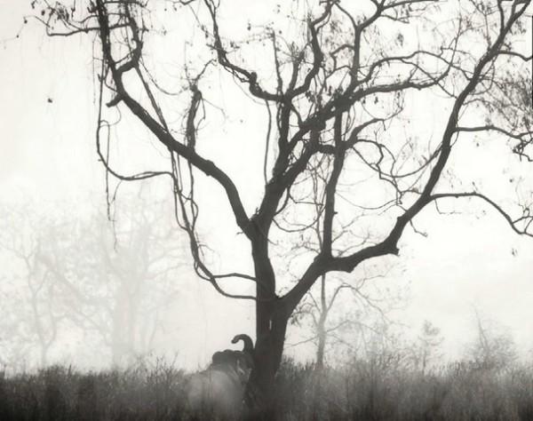 Толстокожий гигант приветствует дерево.