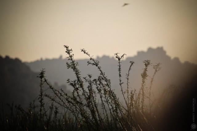 в утренней дымке