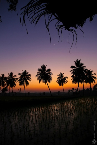 закат над рисовым полем 2