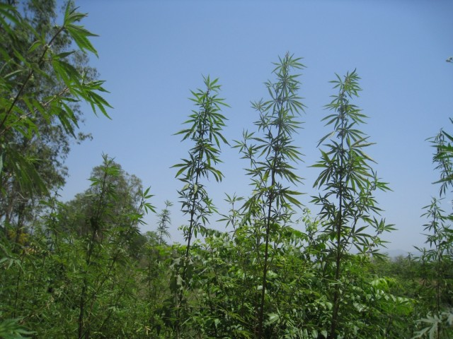 биодобавки на обочинах