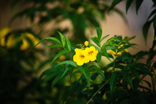 цветы у дерева желаний