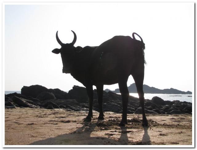 Но настоящими хозяевами на этом празднике жизни были коровы