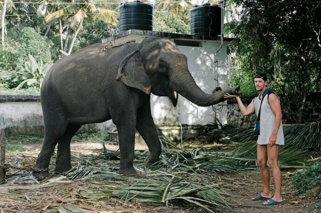 Нашли одинокого слона
