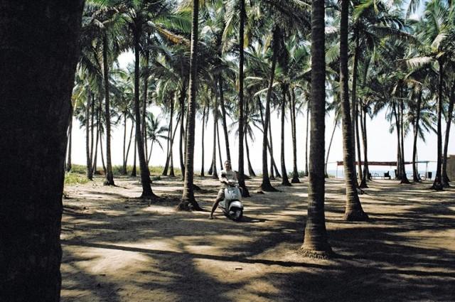 Припляжный пальмовый лес )