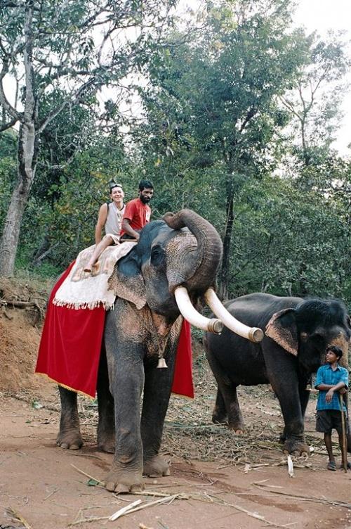 Покатают на слонах )