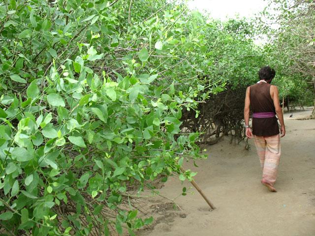 В саду Нидхуван