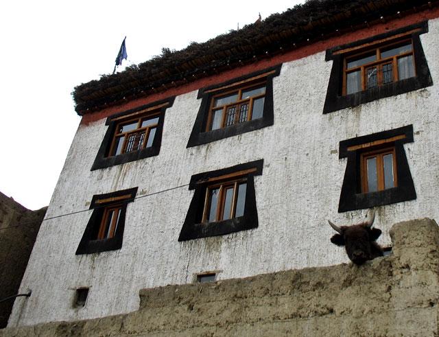 Дом с бычком