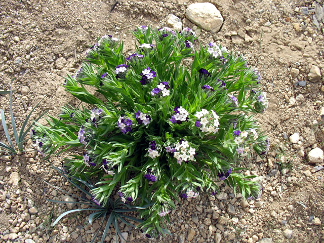 На здешней пустынной земле растут даже какие-то цветы.
