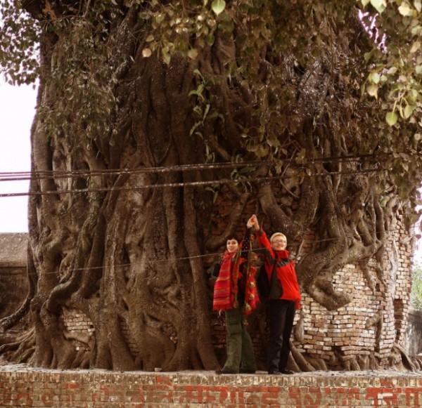 дерево охххххххх