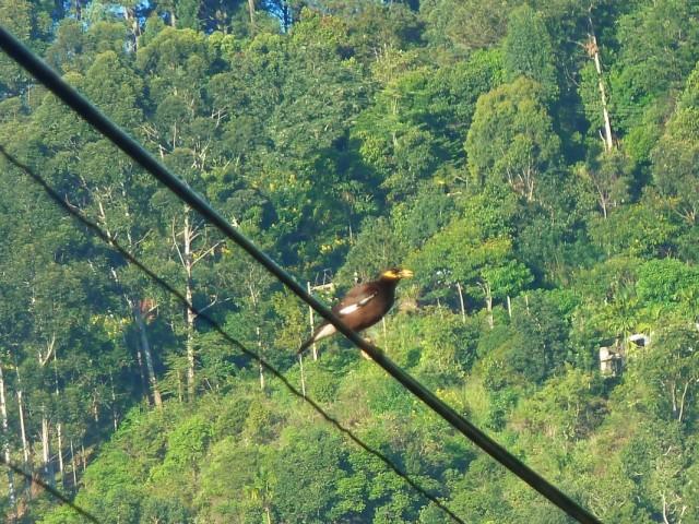 а на проводах сидят другие птицы