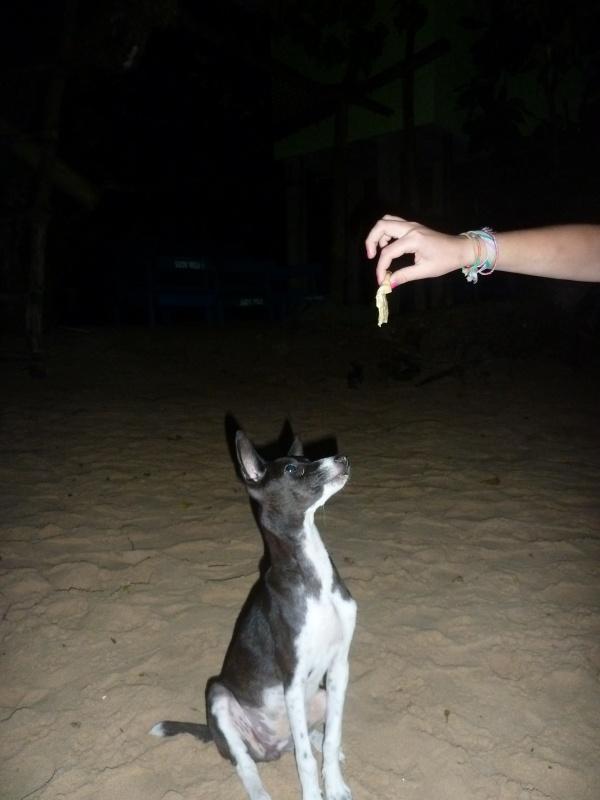 этот пёс живет около пляжного кафе
